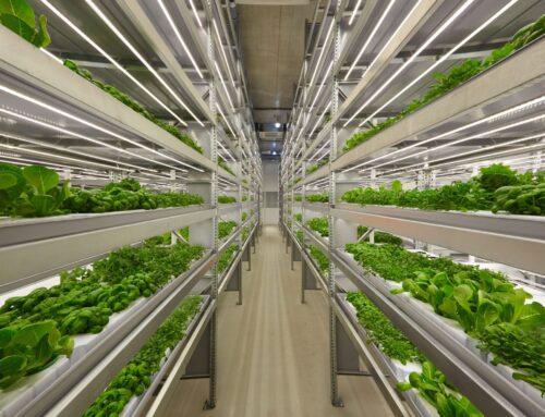 El futuro de la industria alimentaria y la agricultura vertical